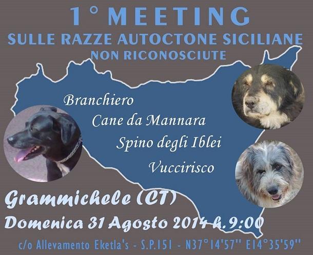 meeting cane siciliano