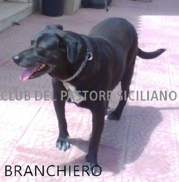 branchiero cane