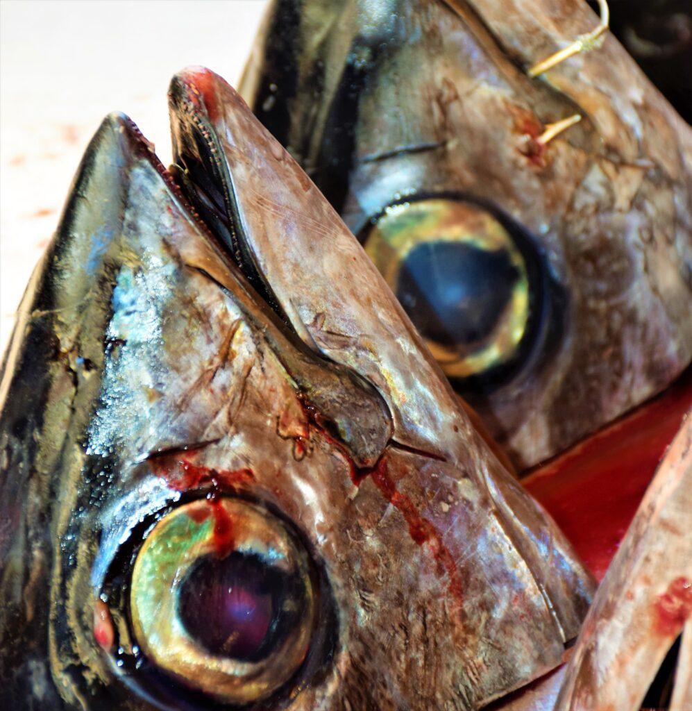 pesce mercato di ortigia siracusa i diari della caponata